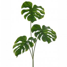 Monstera blad, naturtroget