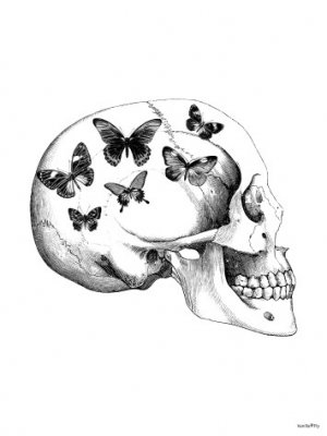 Skull with Butterfly, Vanilla Fly